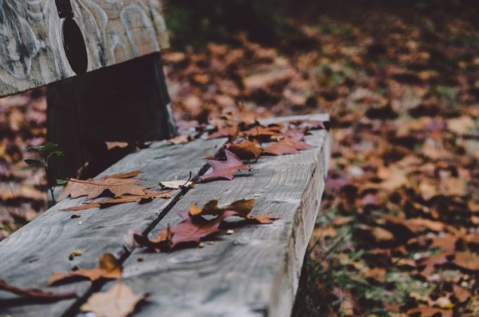 balade dans les bois