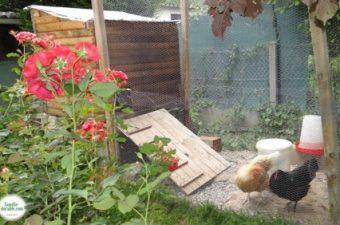 Notre expérience de la permaculture : avoir des poules