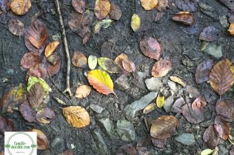 10 raisons pour lesquelles l'automne est ma saison préférée
