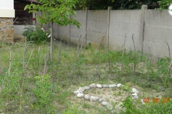 La permaculture : qu'est-ce que c'est ?